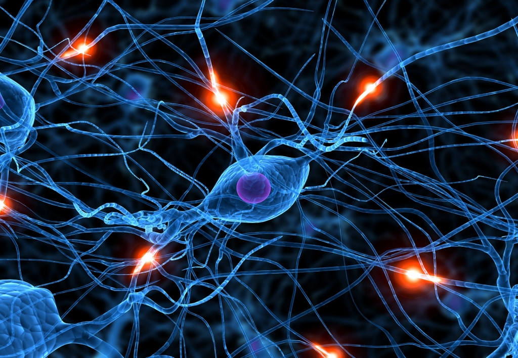 Neurociencias para Tratamiento y Educación